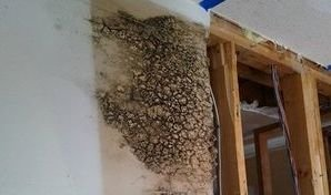 Leak Damage That Caused Mold Growth In Drywall